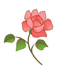 rosa-generico