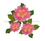 fiori_rosa